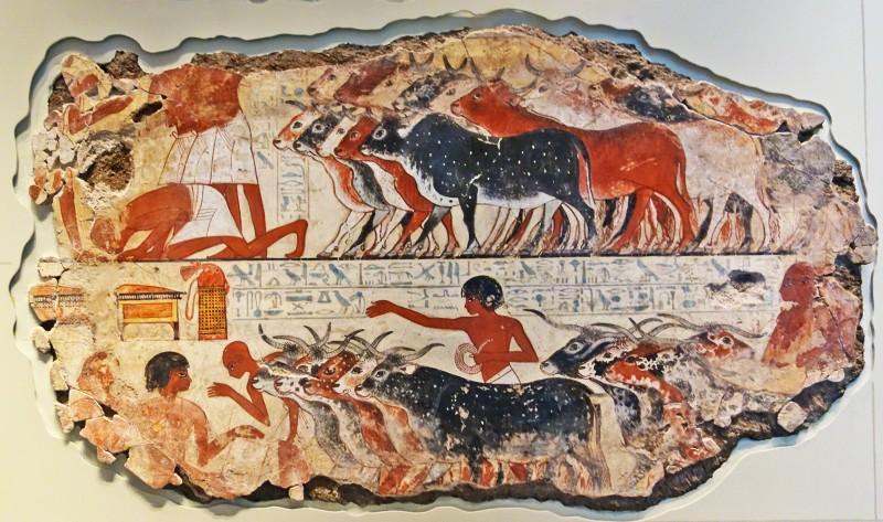 BM 2015 Nebamun Cattle 972